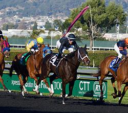 Horse Betting Tutorial